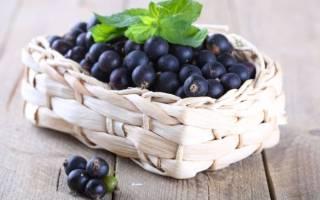 Можно ли лист черной смородины беременности. Можно ли беременным черную смородину? Лечебные свойства черной смородины