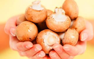 Что нельзя есть беременным грибы. Потенциальный вред от грибов. Потенциальная опасность и противопоказания во время беременности