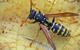 Укус пчелы во время беременности и лечение. Помогают ли прививки? Запрещенные лекарства беременным при укусе насекомыми