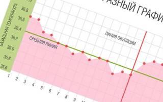 Базальная температура при беременности на ранних сроках. График базальной температуры при беременности. Как измерить базальную температуру. Графики базальной температуры при беременности до задержки с примерами