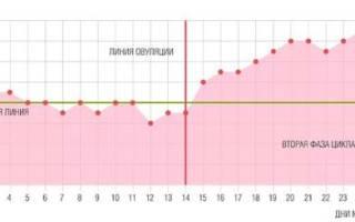 Графики базальной температуры с примерами и расшифровкой. Какая базальная температура при беременности на ранних сроках