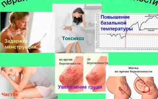 На какой день тест показывает беременность после эко. Когда уже можно делать тест после переноса эмбрионов