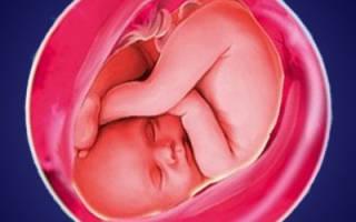 Делает ребенок 39 неделе беременности. неделя беременности — белые выделения. Какие анализы нужно сдать