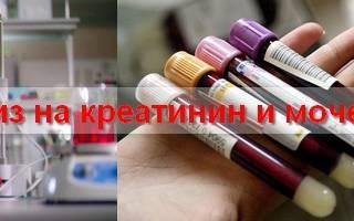Биохимический анализ крови у беременных. Норма мочевины и креатинина у беременных, причины отклонений