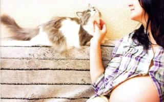 Можно ли беременным брать в руки кошек. Почему беременным нельзя гладить кошек