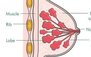 Грудь. Какая должна быть грудь? Нормально ли, что грудь не растет при беременности? Эволюция забила на мужские соски
