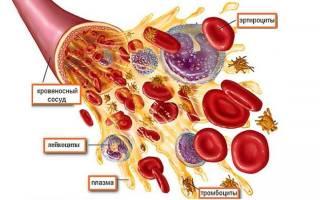 Пониженные тромбоциты в крови при беременности. Причины тромбоцитопении у беременных. Видео — Почему падает уровень тромбоцитов