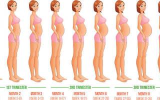 Сколько длится беременность 9 или 10 месяцев. Беременность по месяцам