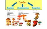 Можно ли беременным грибы. Употребление грибов при беременности