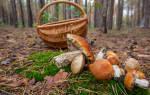 Можно ли грибы беременным? Какие грибы можно есть беременным